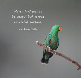 worry_bird